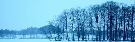 Arbre d'oiseaux de ciel bleu de lac Images stock