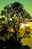 Arbre d'ombre Photo libre de droits