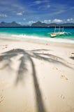 arbre d'ombre de paume Photo stock
