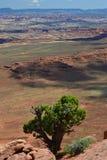 Arbre dans Canyonlands Photographie stock