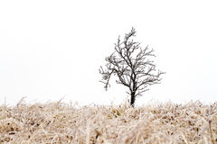 Arbre dans l'étreinte glaciale Photo libre de droits