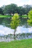 Arbre dans l'eau Photographie stock libre de droits