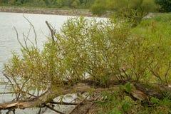 Arbre dans l'eau le long de l'au bord du lac image stock