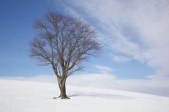 Arbre dans l'hiver Photo libre de droits