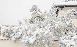 Arbre dans l'horaire d'hiver, branches couvertes de neige blanche et glace Photographie stock