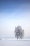 Arbre dans l'horizontal hivernal photos stock