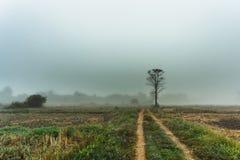 Arbre dans la bruyère de brouillard de brume photographie stock libre de droits