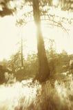Arbre dans la forêt Images stock