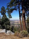 Arbre dans la forêt avec la vue de la vallée Photos libres de droits