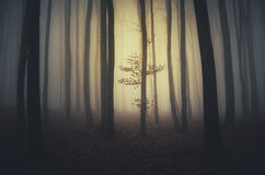 Arbre dans la forêt surréaliste Photo libre de droits