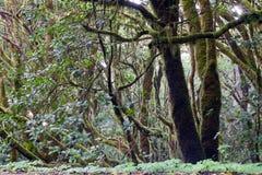 Arbre dans la jungle Images libres de droits