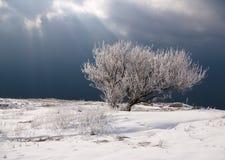 Arbre dans la neige Photographie stock