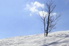 Arbre dans la neige Images libres de droits