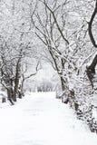 Arbre dans la neige photo stock