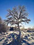 Arbre dans la neige Photos libres de droits