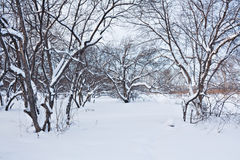 Arbre dans la neige Image stock