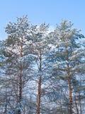 Arbre dans la neige Photos stock