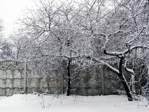Arbre dans la neige près de la barrière image libre de droits