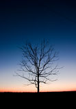 Arbre dans la nuit Photo libre de droits