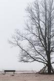 Arbre dans le brouillard Images libres de droits