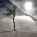 Arbre dans le brouillard Photographie stock