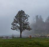 Arbre dans le brouillard Photos stock