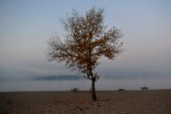 Arbre dans le brouillard Photos libres de droits