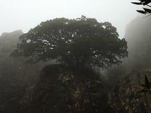 Arbre dans le brouillard Image libre de droits