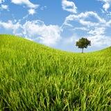 Arbre dans le champ de maïs avec le ciel bleu photo libre de droits