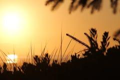 Arbre dans le coucher du soleil Photographie stock