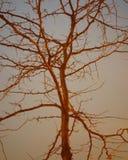 Arbre dans le coucher du soleil Photo libre de droits