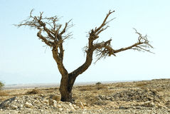 Arbre dans le désert Photo stock