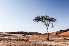 Arbre dans le désert Images libres de droits