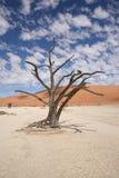 Arbre dans le désert Image libre de droits