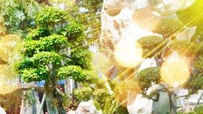 Arbre dans le jardin et les rayons de soleil Image stock