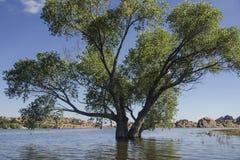 Arbre dans le lac Images libres de droits