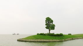 Arbre dans le lac photo stock