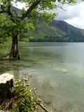 Arbre dans le lac au bord des eaux Photos stock
