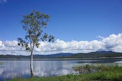 Arbre dans le lac avec des réflexions de nuage Image libre de droits