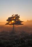 Arbre dans le lever de soleil photographie stock libre de droits