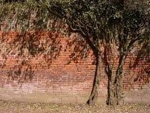 Arbre dans le mur Image libre de droits