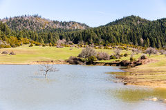 Arbre dans le plateau de karagol de lac près de Tarakli, Sakarya E Image stock