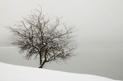 Arbre dans le regain par le lac couvert de neige photos libres de droits
