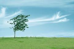 Arbre dans le vent Photo libre de droits