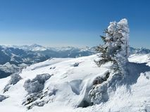 Arbre dans les alpes autrichiennes Photographie stock libre de droits