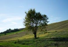 arbre dans les domaines Photographie stock libre de droits