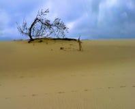 Arbre dans les dunes Photos libres de droits