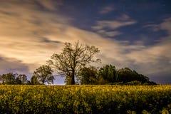 Arbre dans les graines de colza la nuit Photo libre de droits