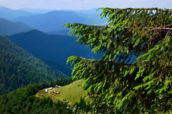 Arbre dans les montagnes Image stock