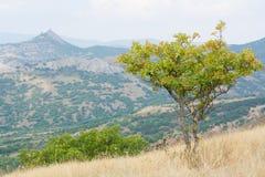 Arbre dans les montagnes Photo stock
